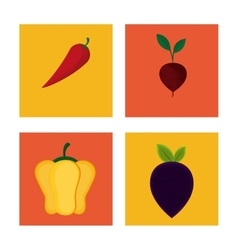 collection vegetables products nature food vector image