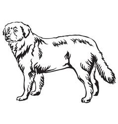 Decorative standing portrait of maremma sheepdog vector