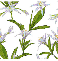 Hand drawn flowers lilies on a white background vector