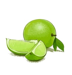 Ripe lime and slice vector