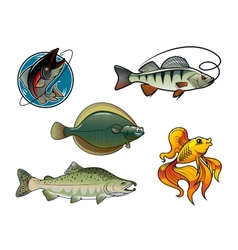 Salmon flounder perch and goldfish vector image