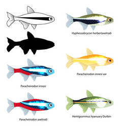 Set aquarium fish isolated on white popular vector