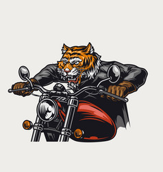 Angry tiger head biker riding motorcycle vector