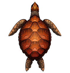 color cartoon of turtle the object vector image