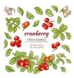 Cranberry elements set vector