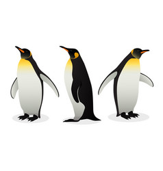 Flock of emperor penguins on white background vector