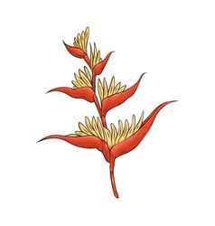 hawaiian bird paradise tropical flower in vector image