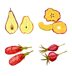 Isolated object fruit and dried logo vector