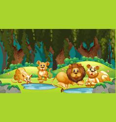 Lions in jungle scene vector