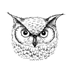 sketch owl head ballpoint pen vector image