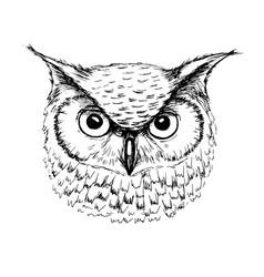 Sketch owl head ballpoint pen vector