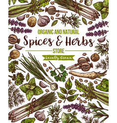 Spices and herbs herbal store poster vector