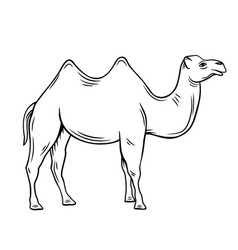 Two-humped camel or bactrianus vector