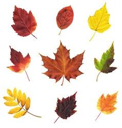 Big Set Leaves vector