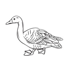 Outline duck icon vector