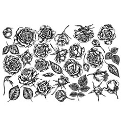 Set hand drawn black and white roses vector