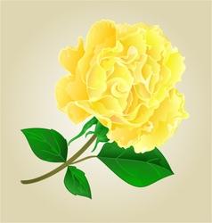 Twig tea rose stem with leaves vector