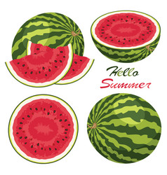 watermelon background set vector image