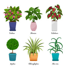 cartoon houseplants in pots vector image