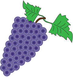 A bunch of grapes on a white background vector