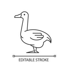 Goose linear icon vector