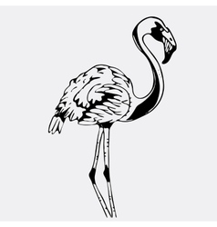 Hand-drawn pencil graphics bird flamingo vector
