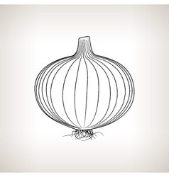 Onion in the Contours on a Light Background vector