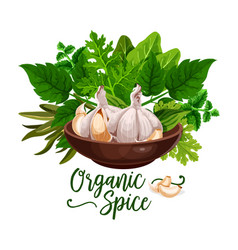 Organic spices and cooking herb ingredient poster vector
