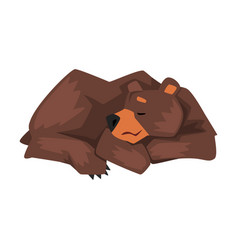 Sleeping brown grizzly bear wild animal character vector
