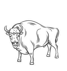 Aurochs or bison vector