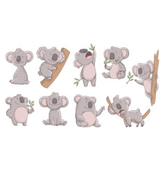 collection cute koala in different poses hand vector image