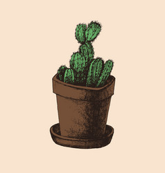 hand drawn cactus in the pot vector image