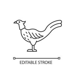 Male pheasant linear icon vector