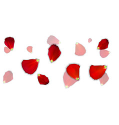 set naturalistic rose petals on background vector image