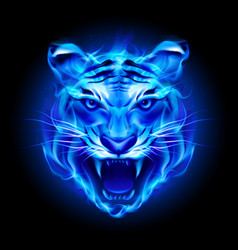 Head of fire tiger in blue on black background vector