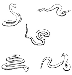 Snakes A sketch by hand Pencil drawing vector image vector image