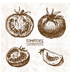 digital detailed tomatoes hand drawn vector image