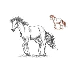 Running white horse sketch portrait vector image vector image