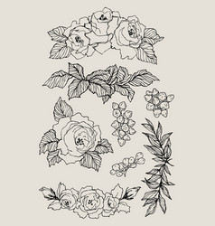 Blooming flower set collection hand drawn vector