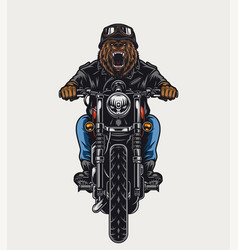 Colorful template angry bear head biker vector