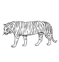 outline tiger icon vector image
