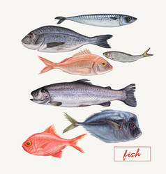 set of seafood hand drawn vector image
