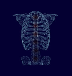Wireframe chest and spine a man blue vector