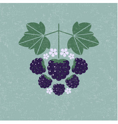 blackberry with leaves vector image