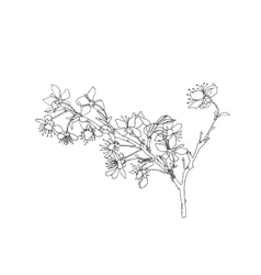 Line drawing blooming flowers on branch vector image vector image