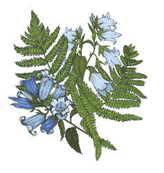bell flowers with fern leaves vector image