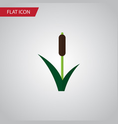 isolated reed flat icon cattail element vector image