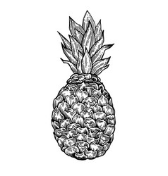 Pineapple engraving vector