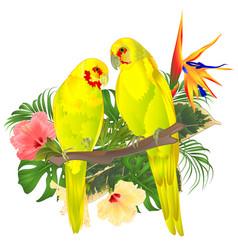 Tropical birds parots yellow indian ringneck vector