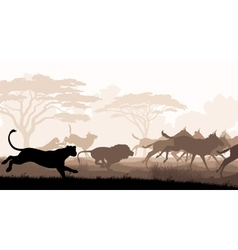 Hunting lions vector image